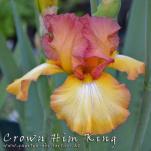 Iris-BEH-'Crown-Him-King'-(3)