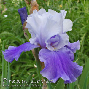 Iris-BEH-'Dream-Lover'-(10)