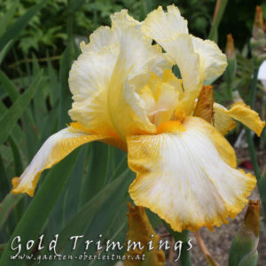 Iris-BEH-'Gold-Trimmings'-(2)