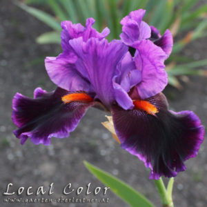 Iris-BEH-'Local-Color'-(6)