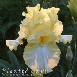 Iris-BEH-'Pleated-Gown'-(1)