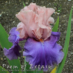 Iris-BEH-'Poem-of-Extasy'-(1)