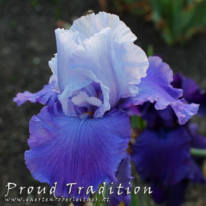 Iris-BEH-'Proud-Tradition'-(4)