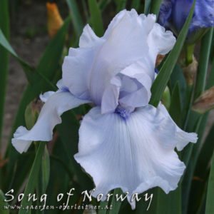 Iris-BEH-'Song-of-Norway'-(2)